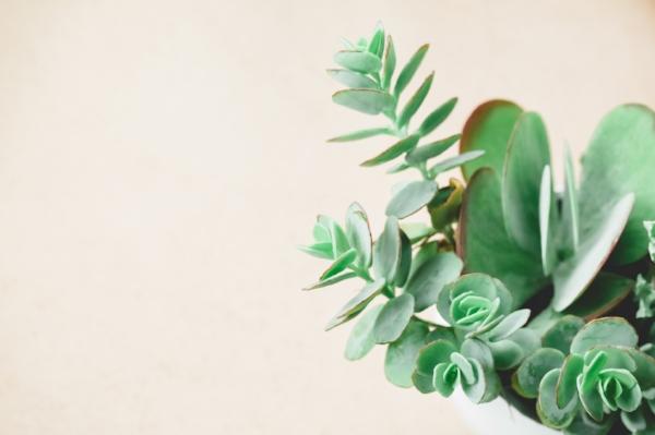 Minimalist_Succulents-105.jpg