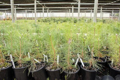 Tree+nursery+2.jpg
