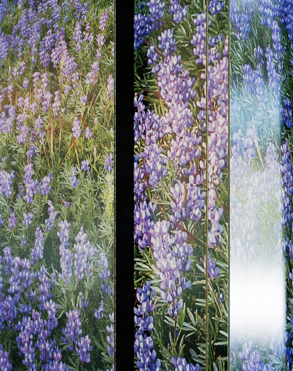 Wildflowers , 2011 Archival pigment print 25 x 20 inches   ————