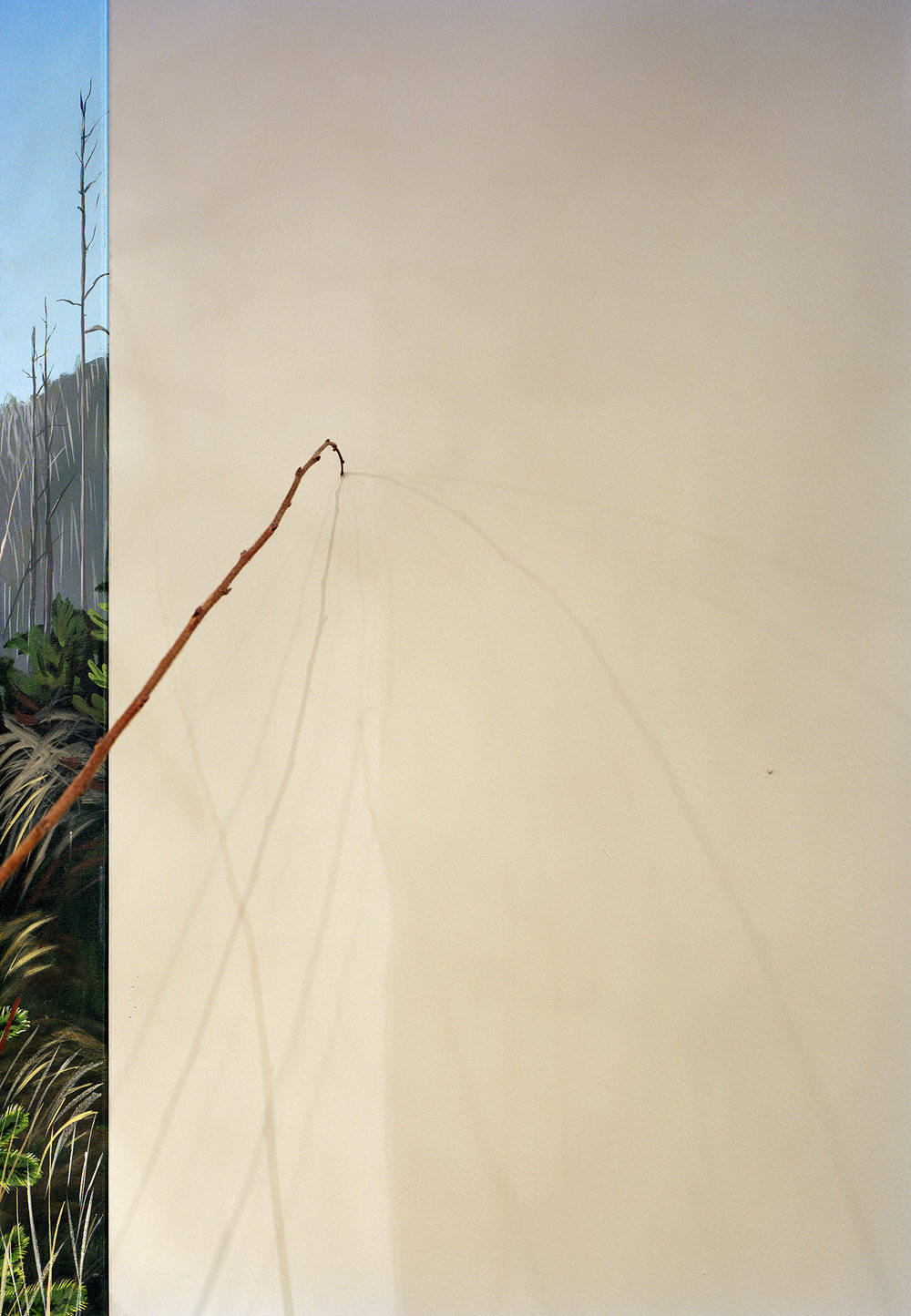 Stray , 2010 Archival pigment print 40 x 28 inches   ————