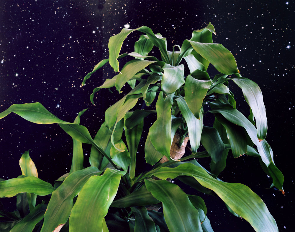Space Plant , 2012 Archival pigment print 40 x 50 inches   ————