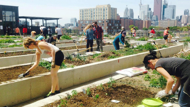 G.Community Gardens - Shared gardens, both as part of public space and on building roof decks, will be explored.