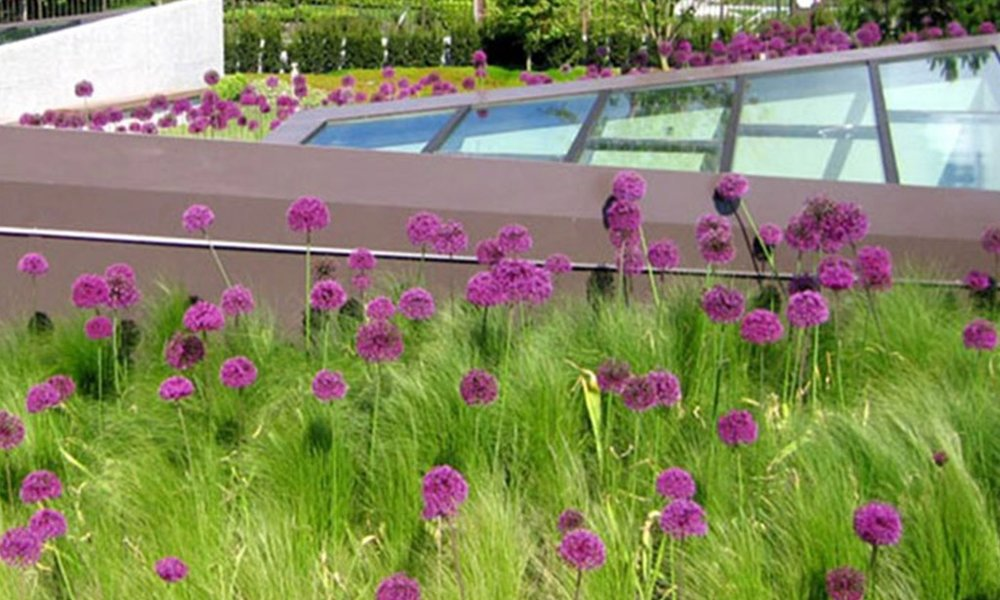 F.Green roofs - Opportunities for accessible and usable green space on roofs and in courtyards are also under consideration to add more open space opportunities and contribute to stormwater management.