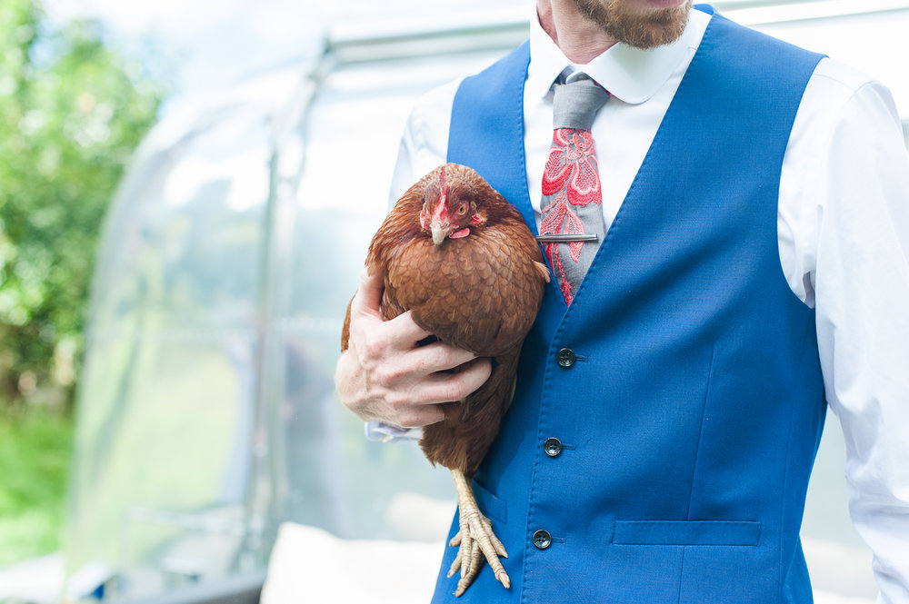 Farm-wedding-in-Falmouth-Cornwall-Groom-holding-chicken-Rhapsody-Road-Photography.jpg