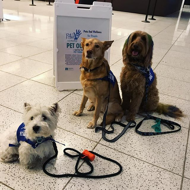 PAWs for People is at the airport tonight offering pet therapy to anyone in need of some puppy love. 🐾🐶💖✈️ #YMM #YMMairport #PetTherapy #FlyYMM