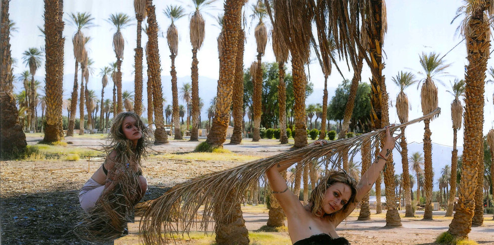 palms-5.jpg