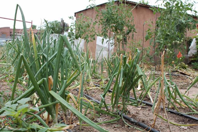 2015.07.17 Corrales Classic Farms-7.jpg
