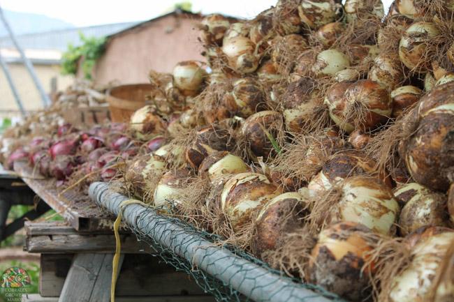 2015.07.17 Corrales Classic Farms-3.jpg