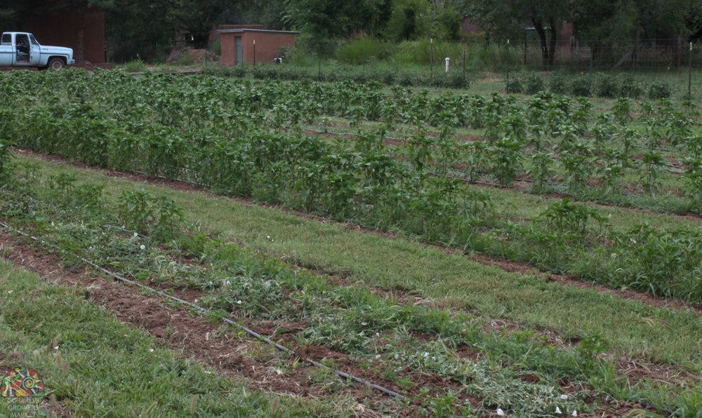 2015.07.17 Gonzales Flower Farm-15.jpg