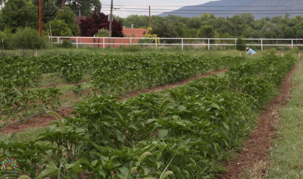 2015.07.17 Gonzales Flower Farm-19.jpg