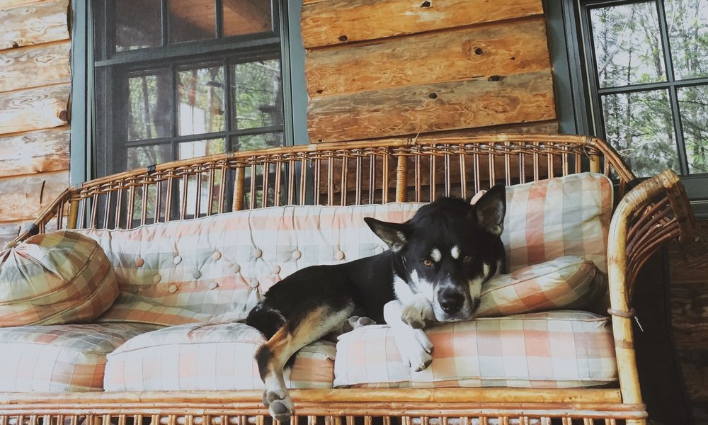 Arrowhead Forest Farm dog.JPG