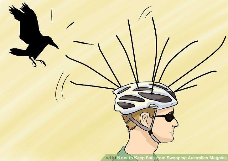 Magpies Swoop Bikers