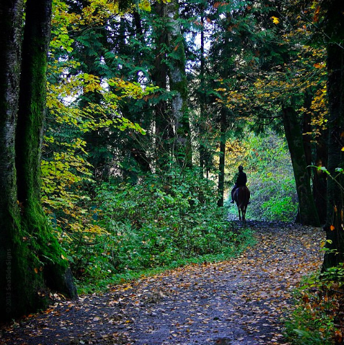 Shaggy mane Trail.