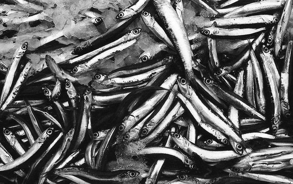 Natura morta. Eyes. Catania's food market, Sicily. Outside of the box #8 Images from my archive. #Sicily #Sicilia #Italy #Italia #neorealism #market #food #film #filmisnotdead #fishes #fish #sicilians #photooftheday #antoniosansica #streetphotography #35mm #urban #kodak #myfeatureshoot #fotomobile #kodaktrix400 #bw #blackandwhite