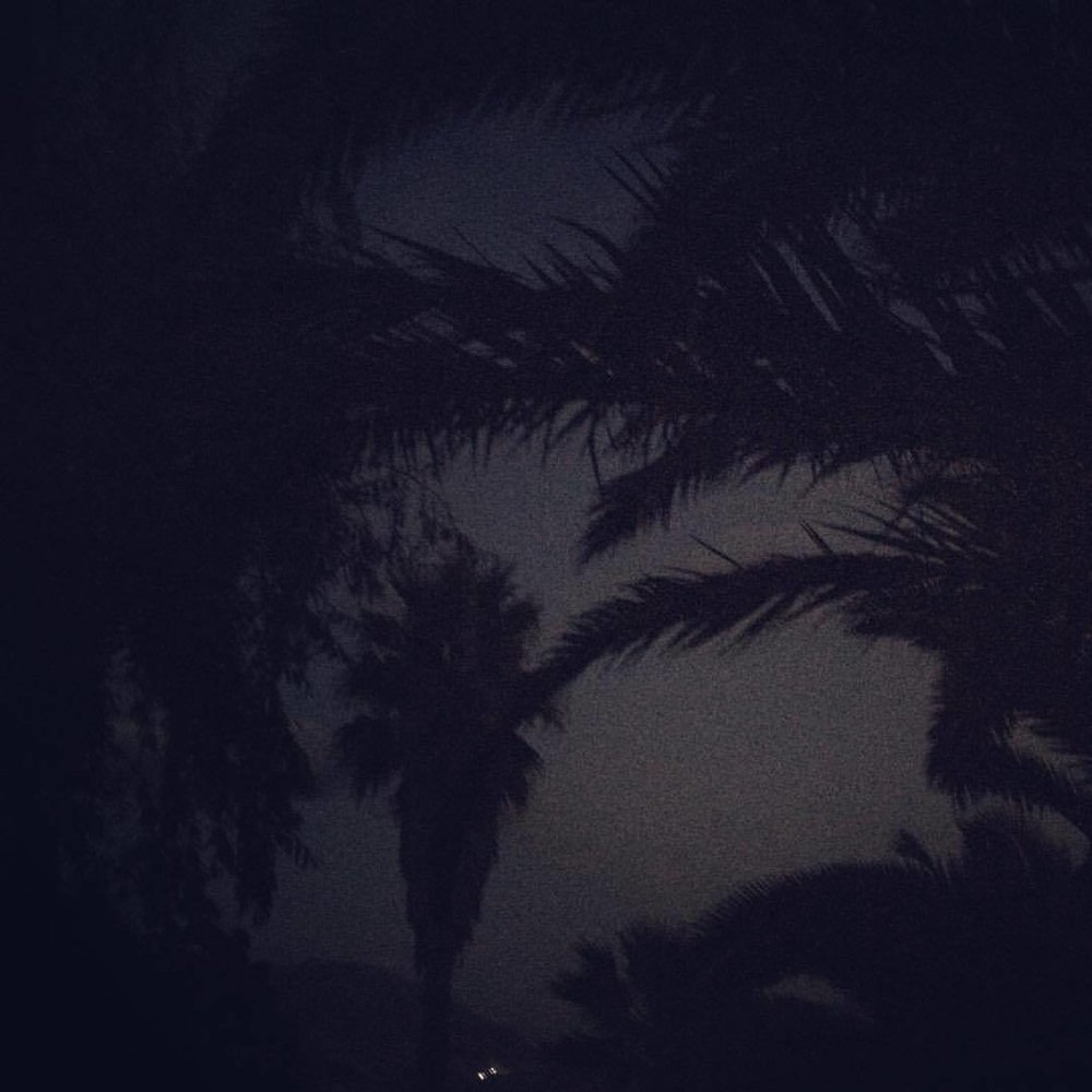 Images from the garden. #home #sicily #sicilia #trapani #everydayitaly #countryside #palms #garden #night #nature #green #instagood #instadaily #picoftheday