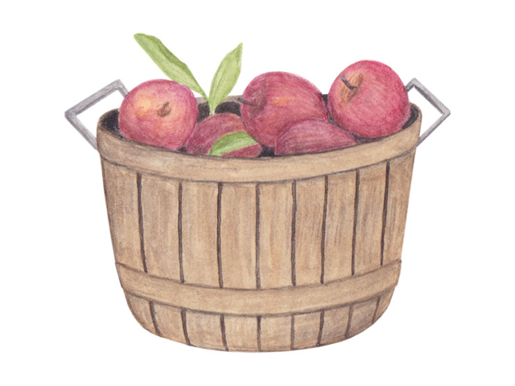 amy zhang creative | fall apple picking illustration