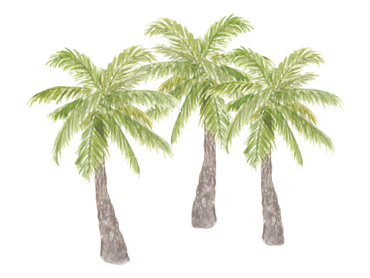 amy zhang creative | palm trees illustration