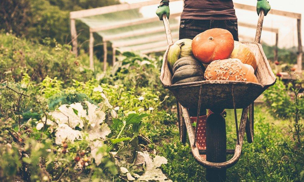 05-things-know-organic-food-farming.jpg