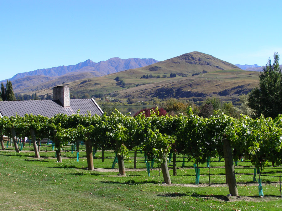 Image via  Queenstown Wine Trail