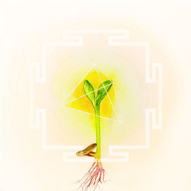 💛🌞🌻The Solar Plexus, also known as Manipura. She is starting to find her purpose in life, and the confidence to grow. She moves quickly up to the sun, and accepts its gifts of light. This chakra is the place of fire, the place of prana, converting food into energy. 💛🌞🌻 #solarplexus #manipurachakra #seedlings #yantras #watercolor #yellow #fire #prana #selfconfidence