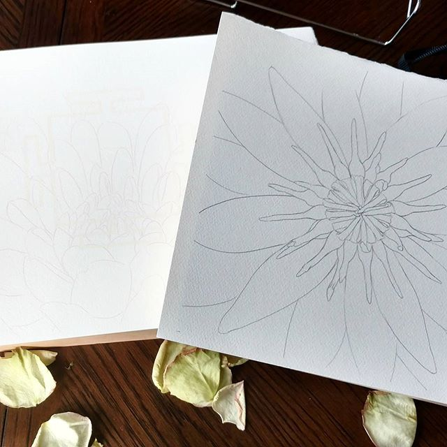 Getting ready to start a new batch of paintings! Outlines are done, next step is mounting the paper to the panels.  #watercolor #bluelotus #dahlias #yantras #weekend #WIP