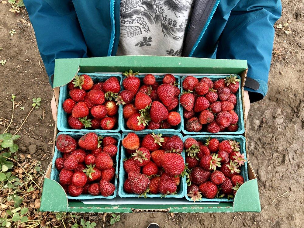 freshly picked strawberries...