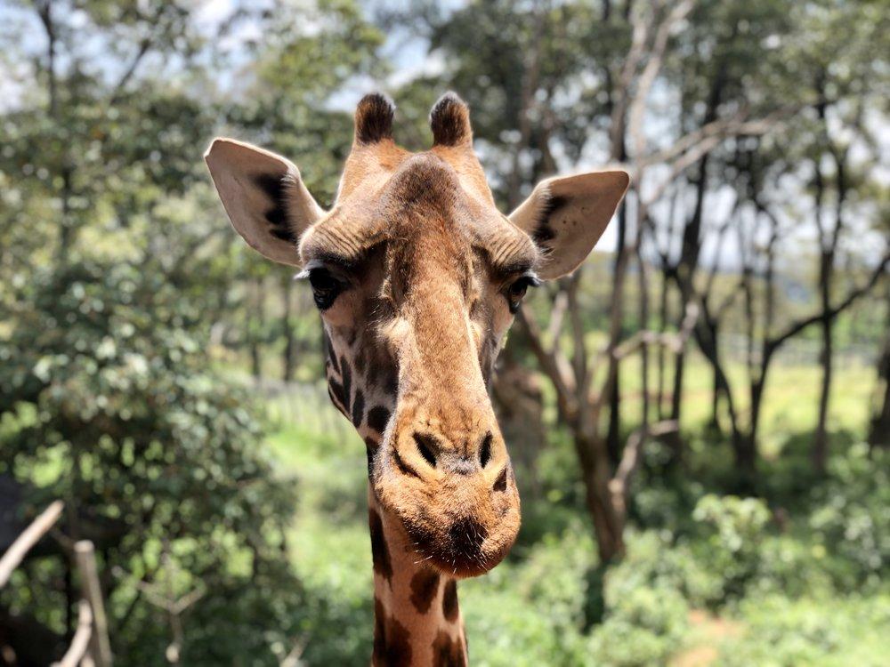 Kenya Believe It    — SHOSHANA GOULD