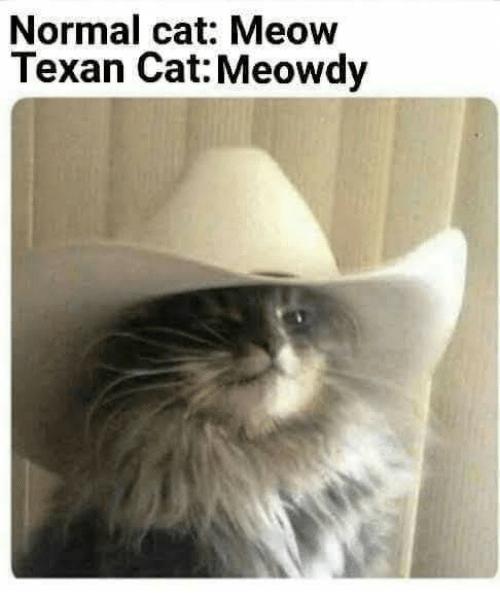 normal-cat-meow-texan-cat-meowdy-39323101.png