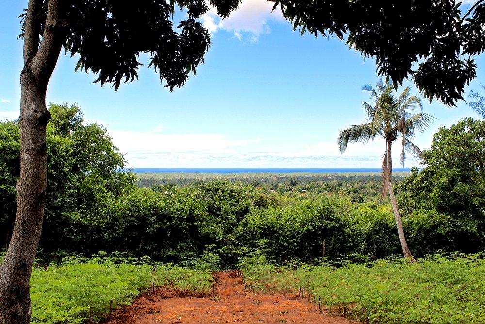 kenya, matuga, moringa plantation (4).JPG