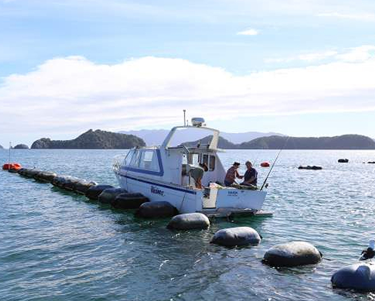 MUSSEL BARGE FISHING   Hannafords Wharf/Te Kouma Rd, Te Kouma   Your chance to hook a big one on a charter fishing boat.