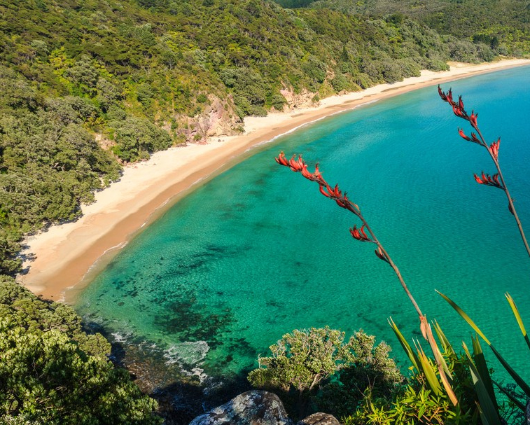 NEW CHUM BEACH   Mangakahia Dr, Whangapoua    Voted one of the world's top 10 beaches - New Chum features stretches of golden sand, native forest and beautiful views to enjoy! 21km & 30 mins from Coromandel Town.