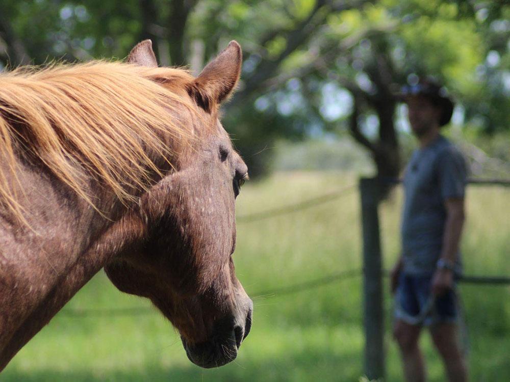 Voor niet-paardenmensen - Lukt het je maar niet om je over te geven aan de stroom van het leven doordat je steeds tegen verschillende obstakels, beperkingen en overtuigingen blijft aanlopen? Laat het paard je helpen om de verbinding met jezelf terug te vinden.
