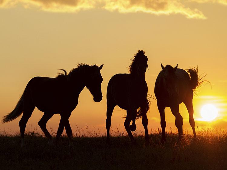 RETRAITES MET PAARDEN - Jaarlijks organiseer ik diverse meerdaagse retraites naar Andalusie en Zuid-Afrika. Tijdens deze bewustzijnsreizen staat het paard uiteraard centraal. Een volledig coach programma, de adembenemende locaties en de paarden helpen jou om je weer volledig in je autentieke kracht te komen zodat jij je potentieel weer volledig kan gaan leven.