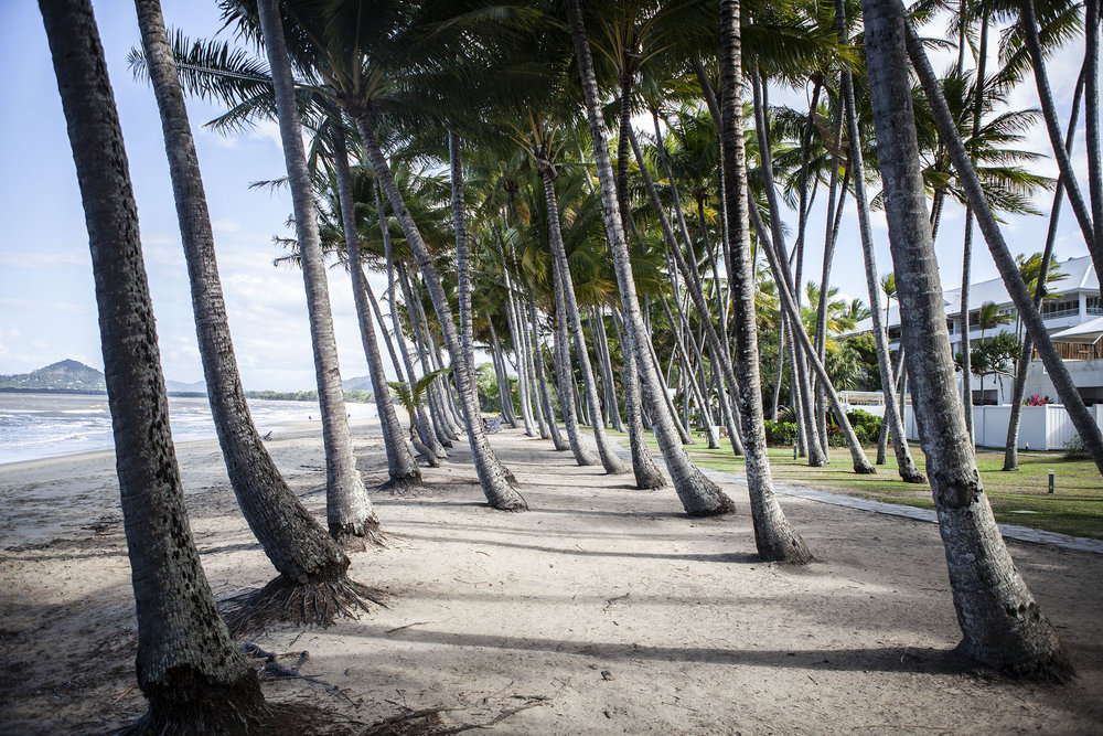Palmcove.jpg