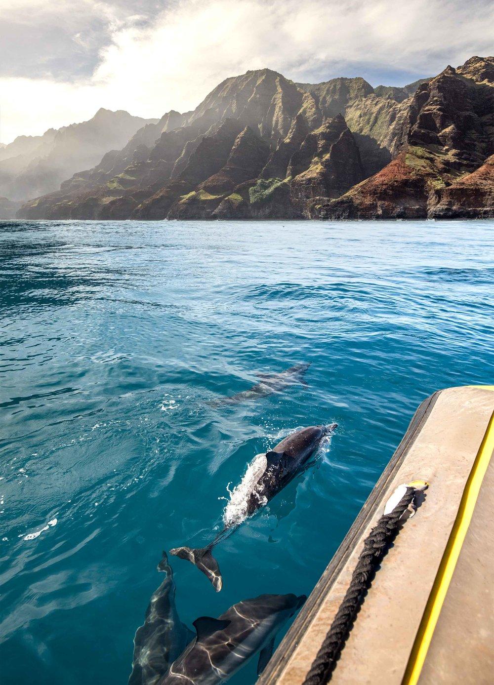 DolphinsExplorer2.jpg