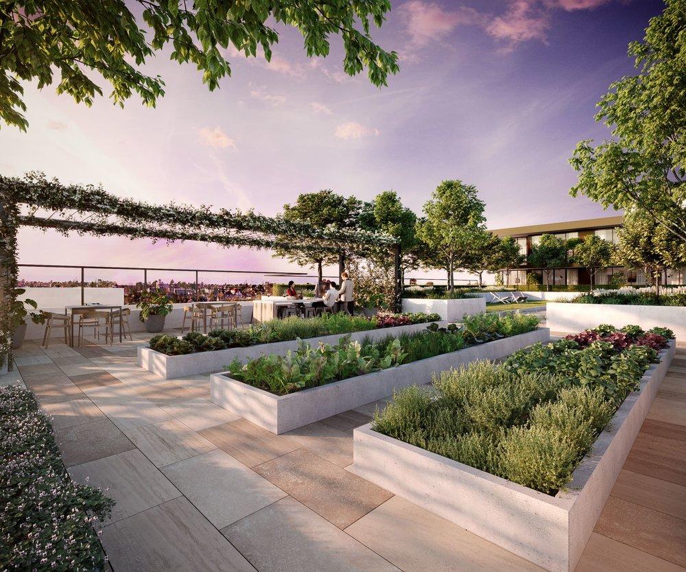 DAHLIA_Roof Garden.jpg