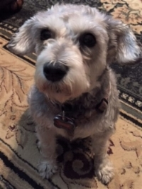 "Mary Jo.  ""Roxie, my 8-year-old Mini Schnauzer, had lymphoma. The vet said she should have been dead. I put her on Jim's cancer program, and the tumors have shrunk! The vet says to keep doing what I'm doing, and he is going to keep Roxie's records to show other pet owners."""