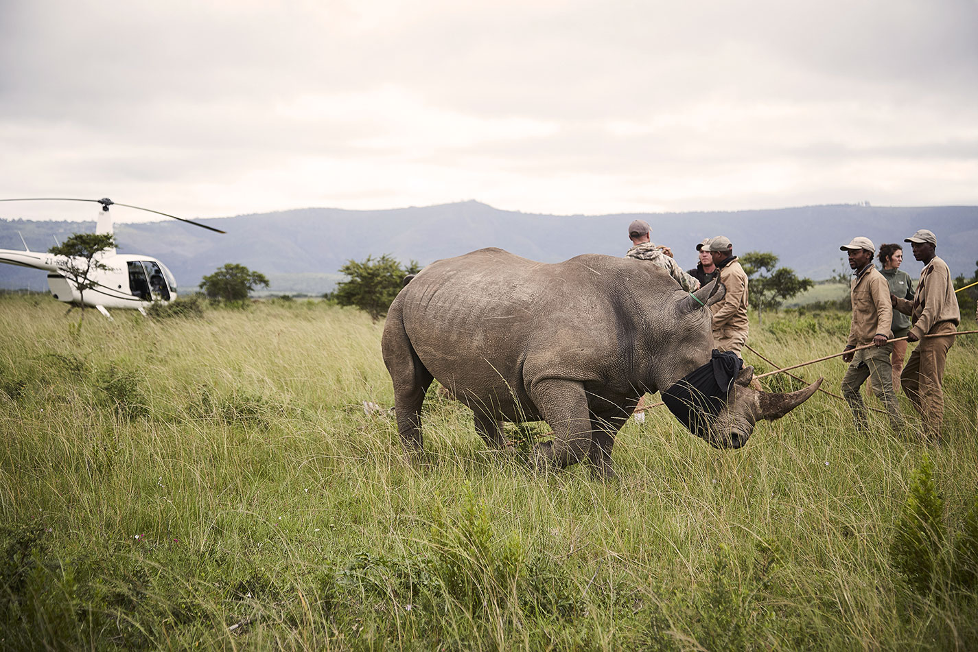 Adult Rhino Rescue & Rapid Response