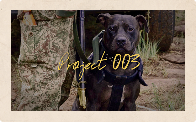 ADOPTING MUSCA   Pit-Track K9 Conservation Unit :  South Africa     Pitbull Terrier 'Super Ambush Specialist' Musca works in SA's most dangerous rhino poaching territories. He has expert training in rhino tracking, human tracking, blood-scent tracking & apprehension training.