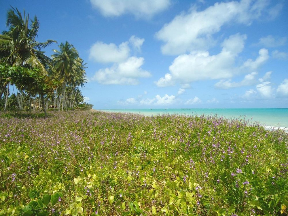 Praia 08.jpg