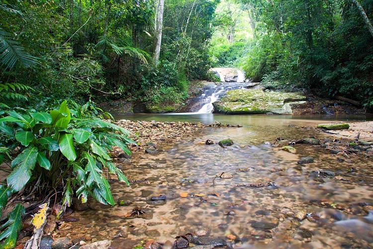 Floresta 01.jpg