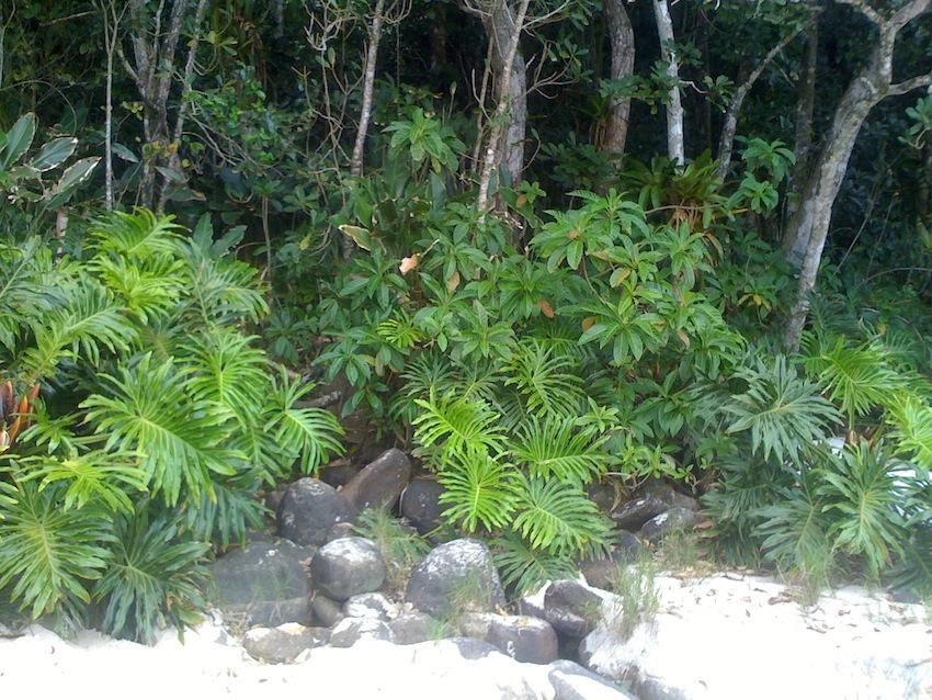 Floresta 07.jpg