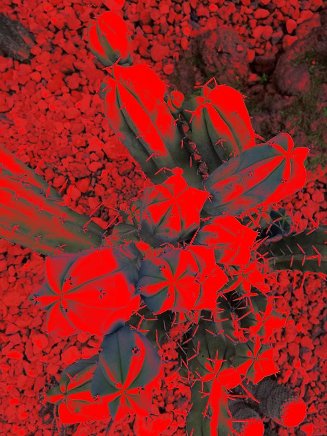 Opuntia, 2016  Fotografía Digital Intervenida Impresa en Papel Algodón  41 x 33 cm