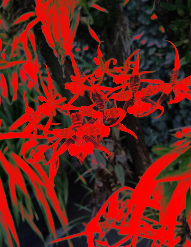 Oncidium, 2016  Fotografía Digital Intervenida Impresa en Papel Algodón  41 x 33 cm