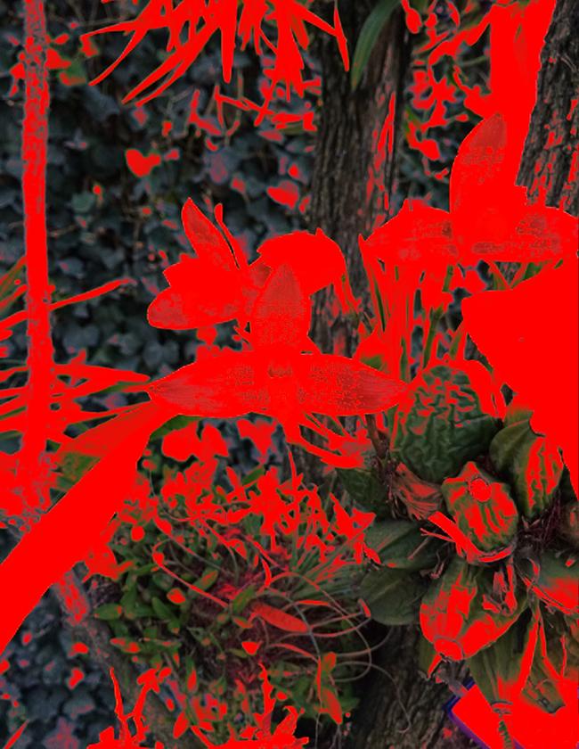 Lycaste, 2016  Fotografía Digital Intervenida Impresa en Papel Algodón  41 x 33 cm