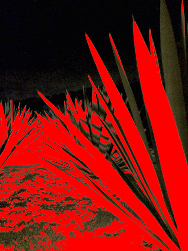 Agave, 2016  Fotografía Digital Intervenida Impresa en Papel Algodón  41 x 33 cm