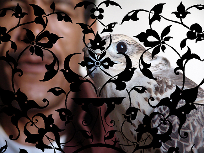 Falcon , 2016  Fotografía digital intervenida  54 x 72 cm