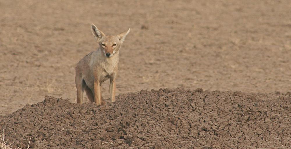 Ethiopia-Wildlife-Alideghi.png