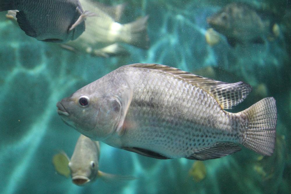 aquaculture & aquaponics -