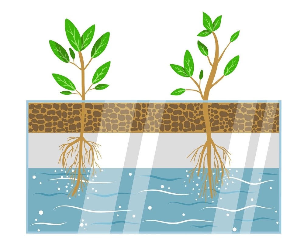 Our System - With a Deep Water floating raft system, like the one used by Organic Nutrition, a plant's roots are suspended in a well-oxygenated solution composed of water and nutrients.